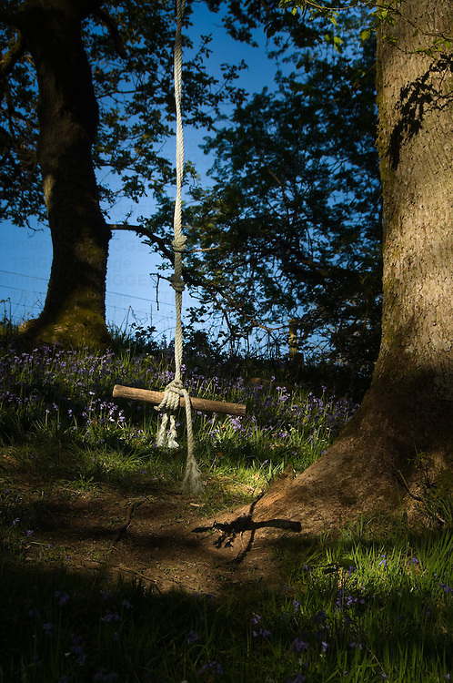 A childs rope hanging from a tree with a wooden seat with sunlight and blubells