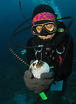 Orchid Island, Taiwan -- Taiwanese diver holding and squeezing a pufferfish until it puffs itself up into a balloon shape.<br />
