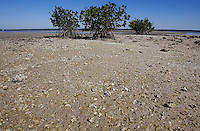 Everglades, Fla. -- Feb. 17, 2007 -- Oyster beds are exposed at low tide around a group of three different types of mangrove trees - red, black, and white - in the Ten Thousand Islands region of Everglades National Park on the southern tip of Florida on Saturday, Feb. 17, 2007.