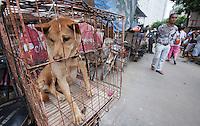 China Dog Meat Festival - Yulin