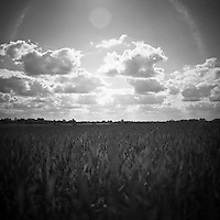 Crop Field, Occold, Suffolk, 2009