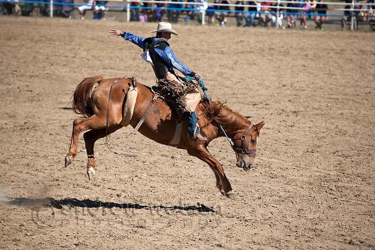 Saddle bronc rider in action at Mareeba Rodeo.  Mareeba, Queensland, Australia