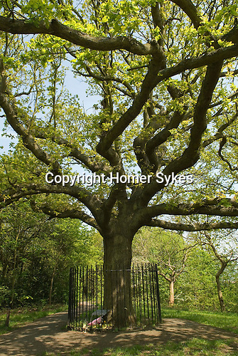 One Tree Hill, Honor Oak. South London. UK. Honor Oak is an inner suburban area principally of the London Borough of Lewisham with part in The London Borough of Southwark. The name originates from Oak of Honor Hill Elizabeth I picnicked with Sir Richard Bulkeley of Beaumaris in the Lewisham area by an oak tree at the summit of a hill. The tree came to be known as the Oak of Honor. The tree surrounded by railings is an oak