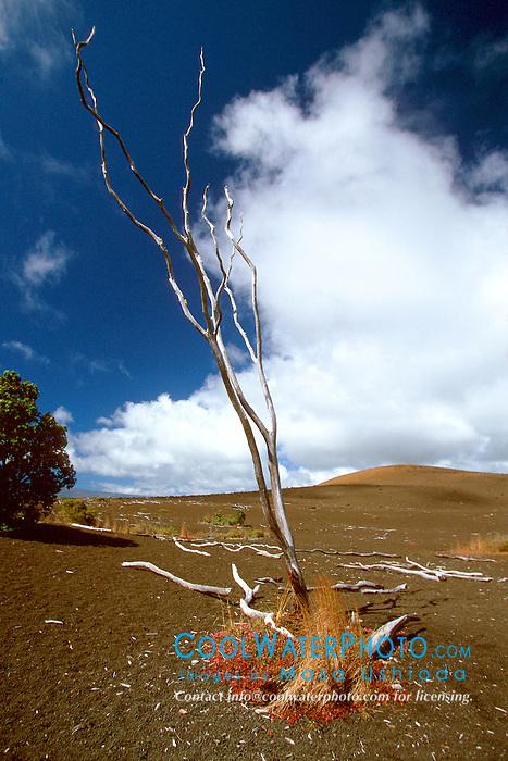 Devastation Trail and Pu`u Pua`i cinder cone, Hawaii Volcanoes National Park, Big Island, Hawaii