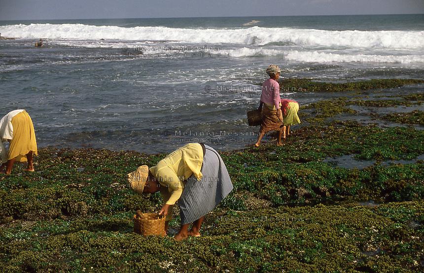 Indonesia, Java Island: harvesters of seaweed.<br /> Indonesia, isola di Giava, raccoglitrici di alghe.
