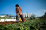 A woman works in a garden in Busan, South Korea.