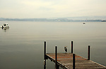 Heron standing on wooden pier on Zuger see at Zug on a misty morning with the mountains in the background, Zug, Switzerland.