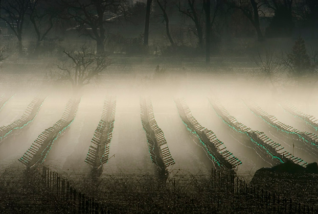 Winter morning in vineyard