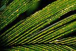 Closeup of a backlit palm.