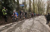 Yves Lampaert (BEL/QuickStep Floors) leading up the Taaienberg<br /> <br /> 72nd Dwars Door Vlaanderen (1.UWT)<br /> 1day race: Roeselare &rsaquo; Waregem BEL (203.4km)