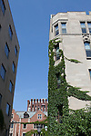 Architecture, covered in ivy, University of Chicago campus, Chicago, Illinois, IL, USA