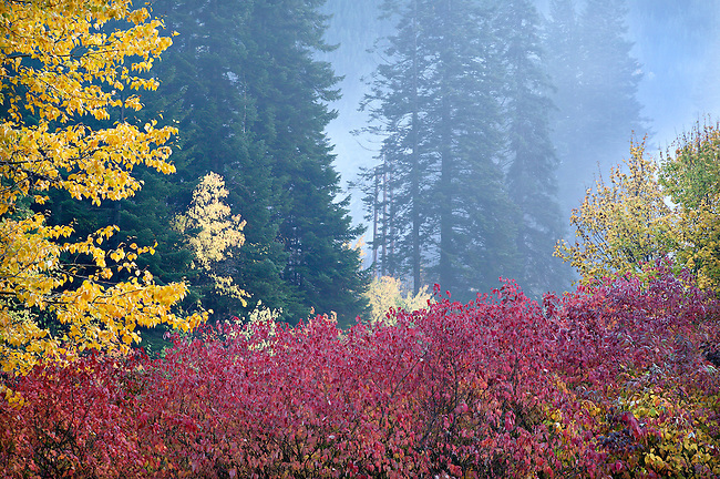 Misty Dusk in Autumn Forest, Washington Cascade Mt.