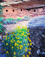 Pictograph House, BLM Wilderness Study Area, Utah   Ancestral Pubeloan ruins