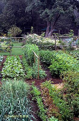 HS18-131x  Vegetable garden