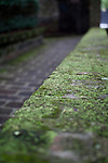 Moss Covered brick pathway