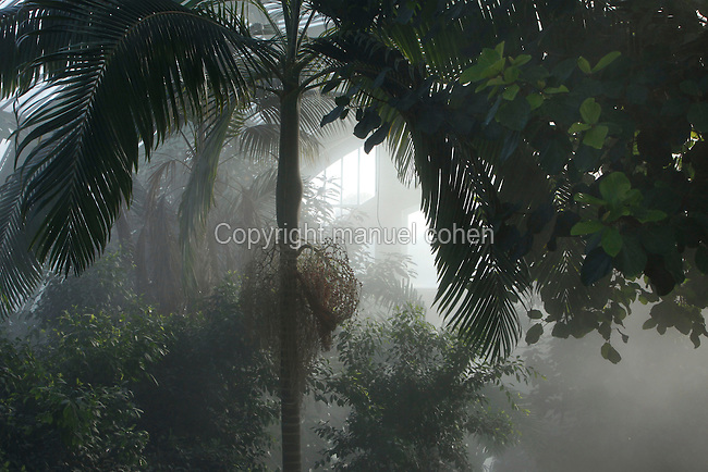 Tropical Rainforest Glasshouse (formerly Le Jardin d'Hiver or Winter Gardens), 1936, René Berger, Jardin des Plantes, Museum National d'Histoire Naturelle, Paris, France. Low angle view of Howea Forsteriana tree surrounded by luxuriant Tropical vegetation seen in the mist of the atomisers against the light.