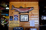 The world record Lahontan cutthroat trout, a 41-pounder caught in 1925, is on display at the Crosby Lodge at Pyramid Lake in Sutcliffe, Nevada, April 18, 2013.