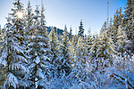 Idaho, North, Coeur d'Alene. Sun peaks through snow covered evergreen trees on Fourth of July Pass in the Coeur d'Alene National Forest.