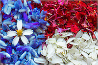 This collage of wildflower petals comes from the colors of lantana and blackfoot daisies growing on our property in the Texas Hill Country. I used the different colors to make a hodge-podge of our Texas flag