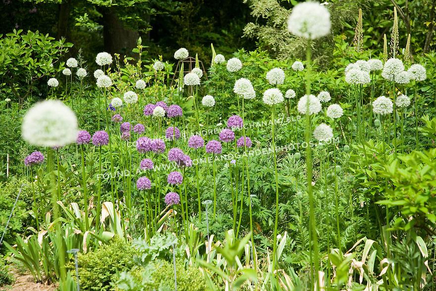 Df014468garden Sunny Allium Photojpg - designing a sunny garden