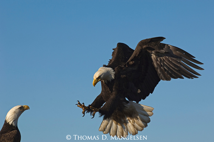 the eagle landing by - photo #25