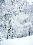 Winter wonderland Snow in trees Commonwealth of Virginia, Fine Art Photography by Ron Bennett, Fine Art, Fine Art photography, Art Photography, Copyright RonBennettPhotography.com ©