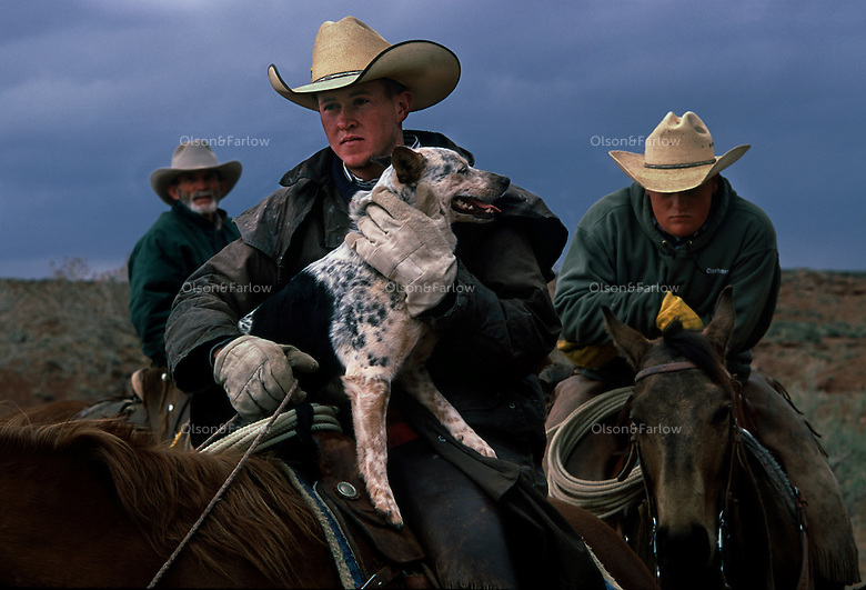 Cowboys from central Utah wait for a signal to begin branding young calves at the Dugout Ranch in near Moab.  One ranch hand was happily reunited with his dog.  They were separated when they were moving cattle, and the dog jumped up into the saddle upon seeing his owner.