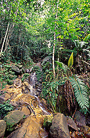 Sinharaja Forest Reserve. Sinharaja Forest Reserve is a national park in Sri Lanka. It is of international significance and has been designated a Biosphere Reserve and World Heritage Site by UNESCO.