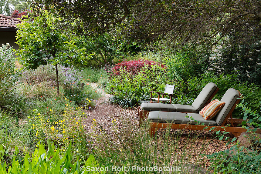 Planting Under Oak Trees : Holt g photobotanic stock photography garden