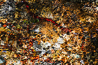 There is gold in them thar hills. River stones and pebbles beneath a Montana creek shimmer with gold and red creating a montage of design and color. Light reflection and refraction. It's everything.