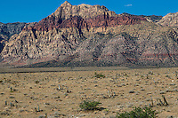 Red Rock Canyon, Nevada.  Looking toward Spring Mountains.  Fire-damaged Joshua tree stumps in foreground.