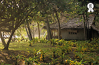 Vanuatu, Tanna Island, rural wooden house behind trees (Licence this image exclusively with Getty: http://www.gettyimages.com/detail/sb10068805al-001 )