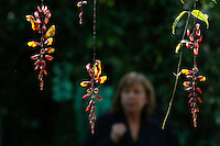 People watch orchids during the Orchid show at the botanical garden in Bronx, New York. March 18, 2014. Photo by Eduardo MunozAlvarez/VIEW