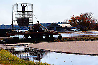 """After flooding a bog and corraling the cranberries, Cape Cod cranberry grower, Ray Thacher, sets up the """"detrasher"""" which cleans and separates the berries after they are pumped from the bog."""