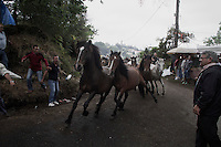 Some horses gallop guided for the aloitadores to the gigs during Rapa das Bestas de Sabucedo (Galicia) on July 3, 2011.  When summertime comes in Galicia (Northwest of Spain), the use of &ldquo;curro&rdquo; begins. A ritual which preserves the free and wild spirit of this region which has remained traditionally tied to nature.<br />