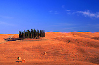 Tuscany, cypresses in a field near Siena - photograph by Owen Franken