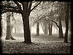 wood, tree, fog, mist, lost, scared, fear, eerie, shapes, imagination,