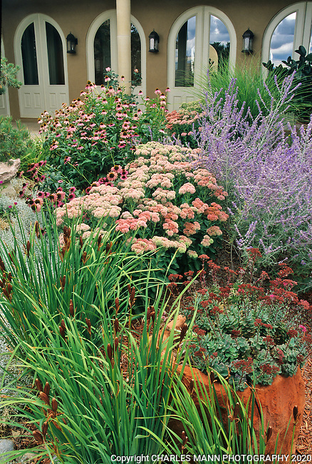 In the southwest and Rocky Mountain areas, water wise landscape designs come in all colors and shapes and incorporate a wide range of both nativespecies as well as appropriate adapted plants, ranging from succulents and cacti to endemic penstemons and traditional perennials.A drought tolerant courtyard  garden designed by Sana Fe Permaculture features sedums, echinacea, Russian sage and other tough plants.