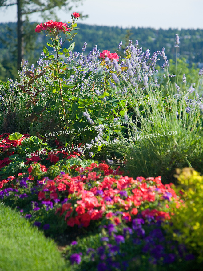 Colorful Summer Flowers In A Border Image