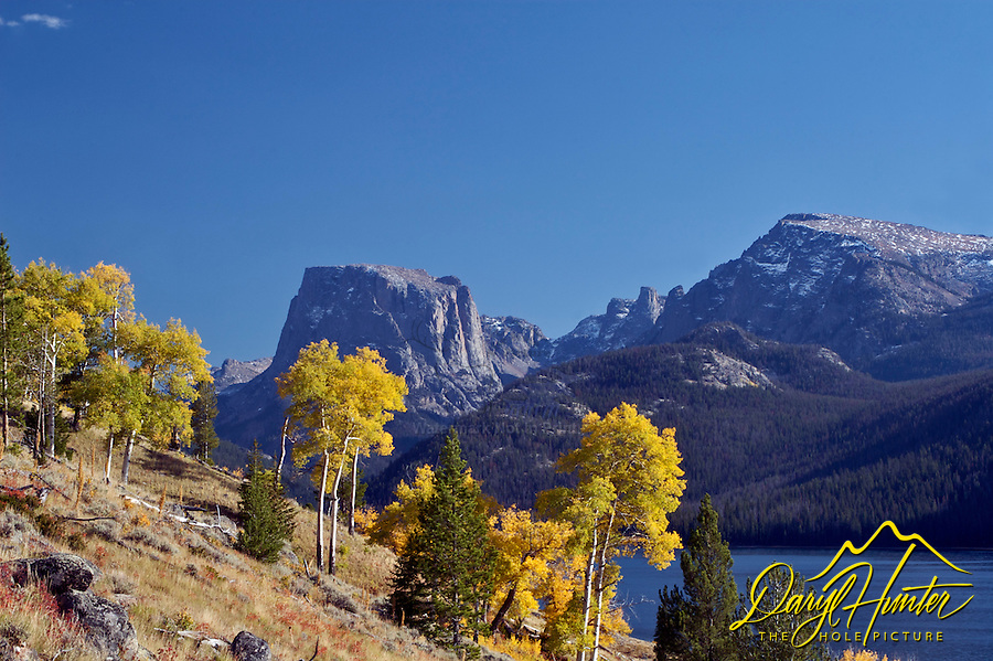 Green River Lakes, Fall, yellow aspen