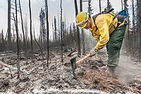 Firefighter mops up burns on the Eagle Trail forest fire near Tok, Alaska, May, 2010.