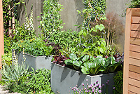 Vegetable Garden in containers