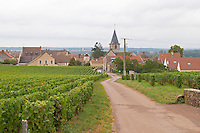 Vineyard. Romanee Saint Vivant to the left, La Grande Rue, right, Grands Crus. Vosne Romanee village. Vosne Romanee, Cote de Nuits, d'Or, Burgundy, France