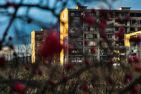 The Gipsy ghetto of Chanov seen through a dog rose bush on outskirts of Most, Czech Republic, 19 December 2008.