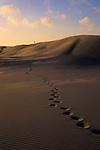 A hiker stands atop a sand dune ridge in Oregon Dunes National Recreation Area, Oregon