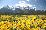 Grand Teton Mountains<br />