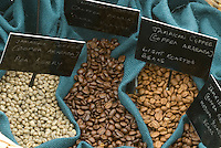 Coffee beans horizontal closeup of types of coffee beans (Coffea arabica) from raw to dark roast in same image with black signs and white writing labels, displayed and tagged, on blue fabric, good textbook educational