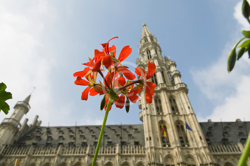 Belgium, Brussels, Town Hall, Grand Place, spire with flower in foreground