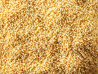 Millet grain stock photos