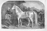 vintage illustration: Arab Horse, Calif of Cairo. Harper's Weekly 1860